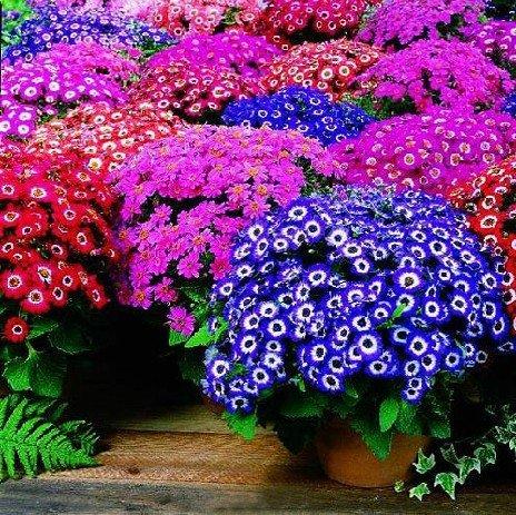 Цветы однолетние посадка и уход