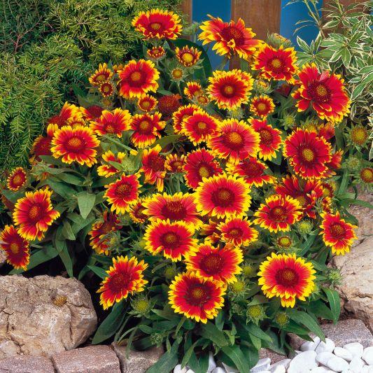 Все садовые цветы и выращивание