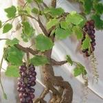 Виноградное дерево