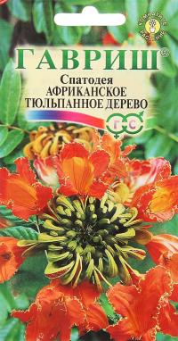 Спатодея Африканское Тюльпанное Дерево