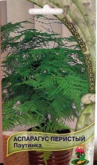 Аспарагус Перистый (Спаржа) Паутинка