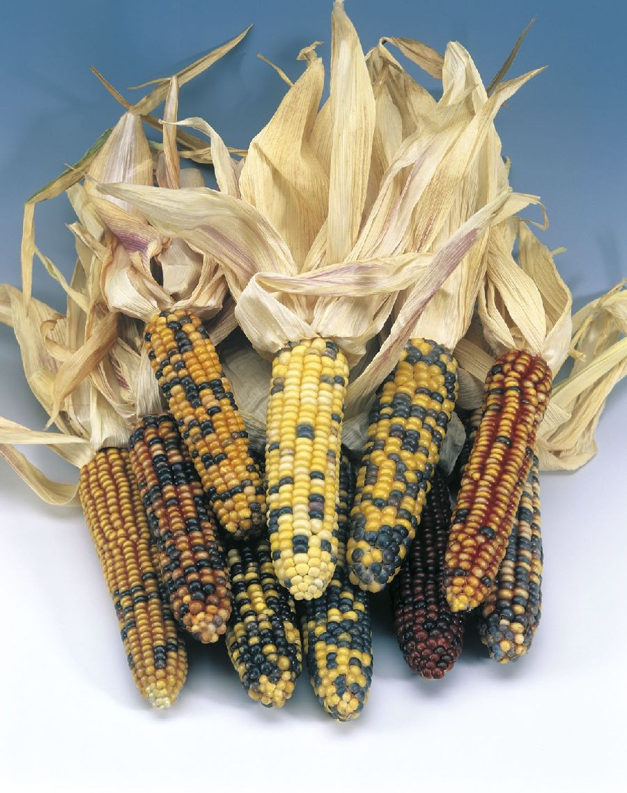 кукуруза купить цена