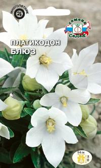Платикодон Блюз белый