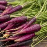 Фиолетовая морковь