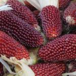 Земляничная кукуруза