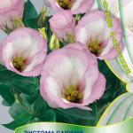 Эустома Розовая дымка