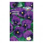 Фиалка Фиолетово-Черная