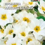 Примула Аккорд белый