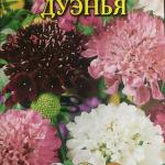 Скабиоза Дуэнья