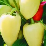 Перец сладкий Белозерка