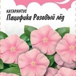 Катарантус Пацифика Розовый Лед