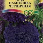 Астра Пампушка Черничная