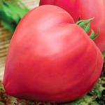 Томат Бычье Сердце Розовое