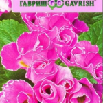 Примула Махровая F1 Розанна Розовая