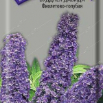 Буддлея Давида Фиолетово-Голубая